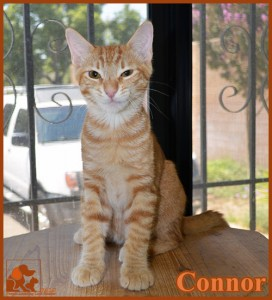 PALS Pet of the Week - Connor .5