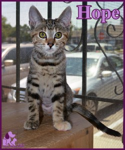 PALS Pet of the Week - Hope .5