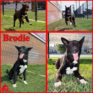 pals-pet-of-the-week-brodie-1-5