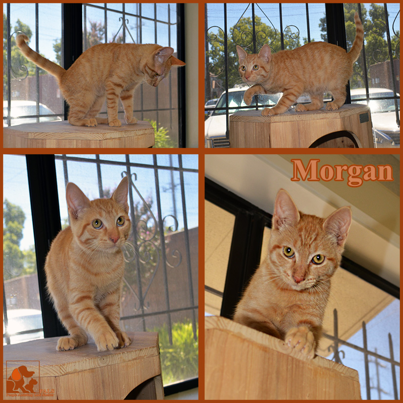 pals-pet-of-the-week-morgan-1-5
