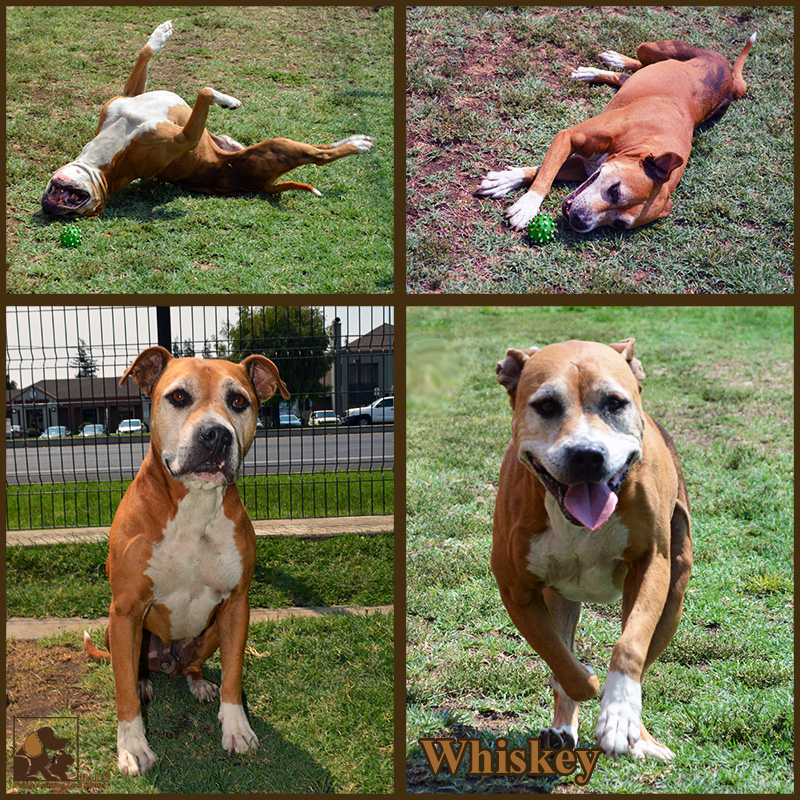 pals-pet-of-the-week-whiskey-1-5