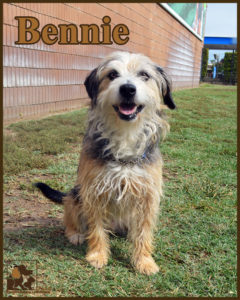 pals-pet-of-the-week-bennie-5