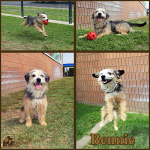 pals-pet-of-the-week-bennie-1-5