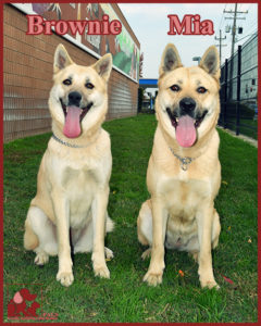 brownie-mia-5