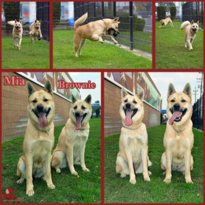 pals-pet-of-the-week-brownie-mia-1-5