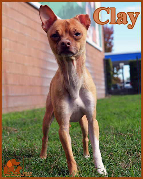 pals-pet-of-the-week-clay-5