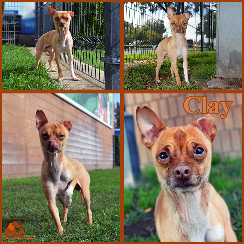 pals-pet-of-the-week-clay-1-5