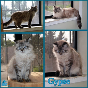 pals-pet-of-the-week-gypse-1-5