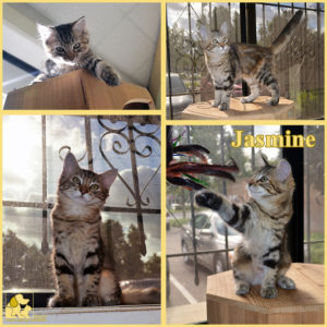 pals-pet-of-the-week-jasmine-1-5
