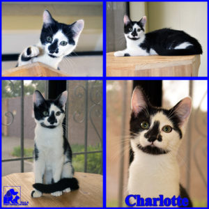 pals-pet-of-the-week-charlotte-1-5