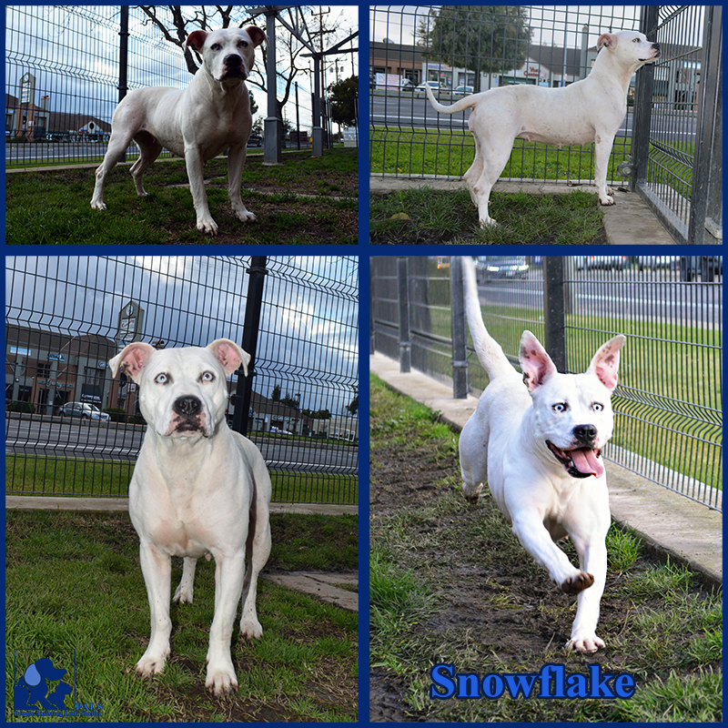 PALS Pet of the Week - Snowflake 1.5