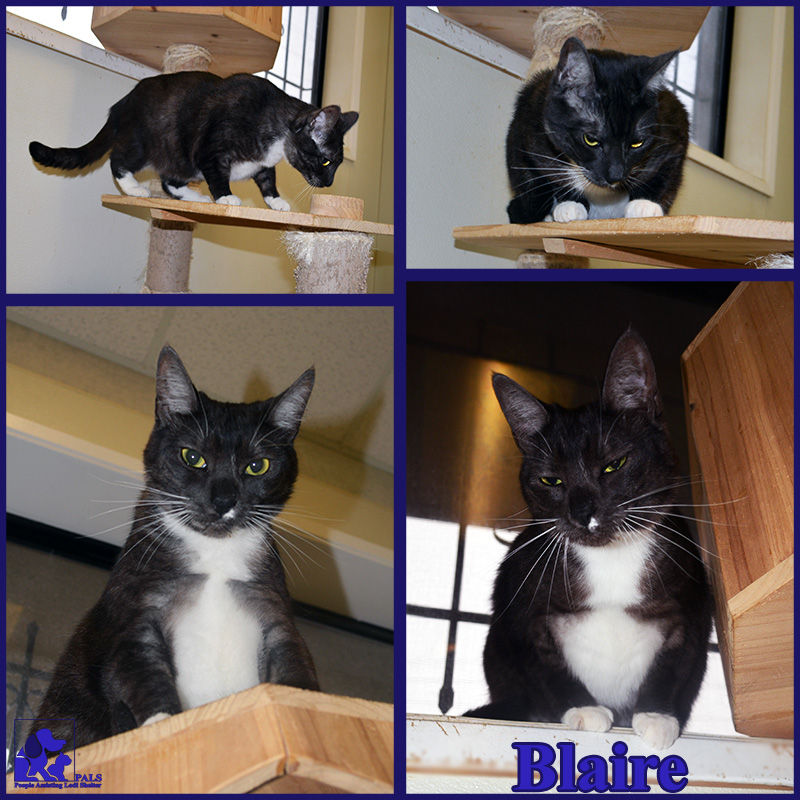 PALS Pet of the Week - Blaire 1.5