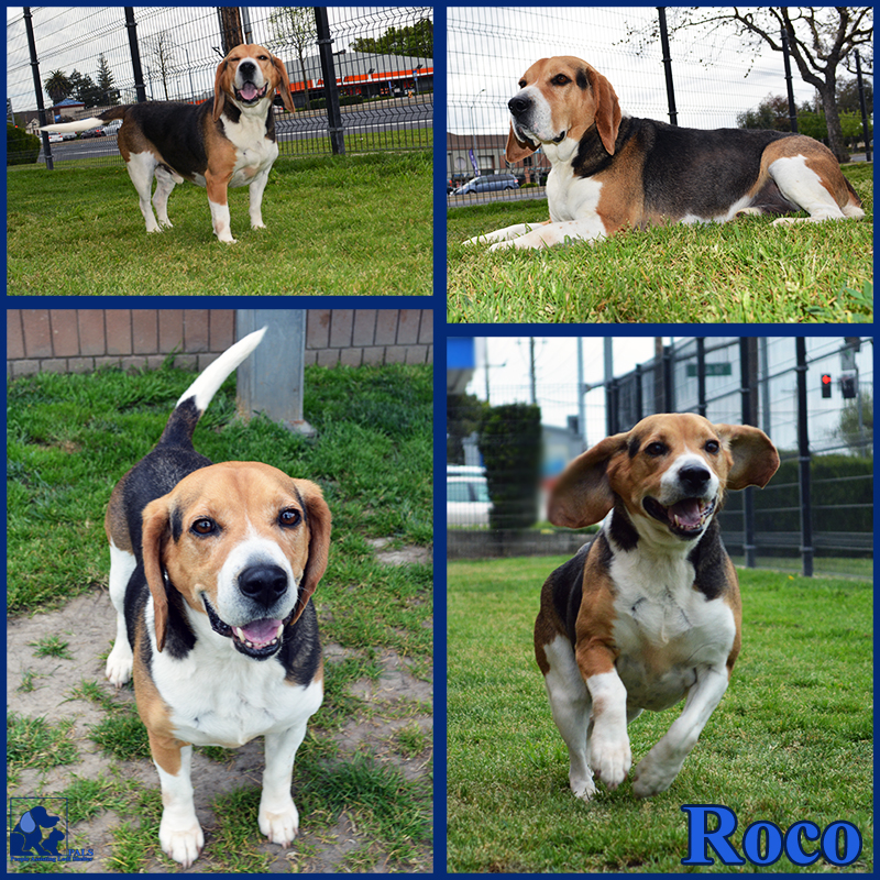 PALS Pet of the Week - Roco 1.5