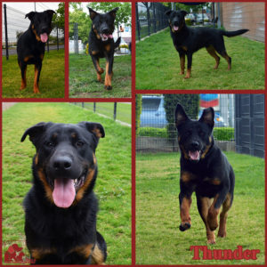 PALS Pet of the Week - Thunder 1.5