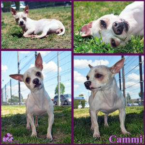 PALS Pet of the Week - Cammi 1.5