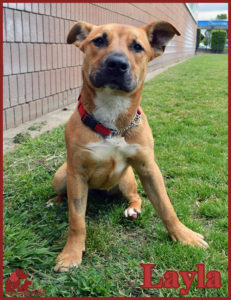 PALS Pet of the Week - Layla .5