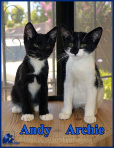 PALS Pet of the Week - Archie & Andy .5