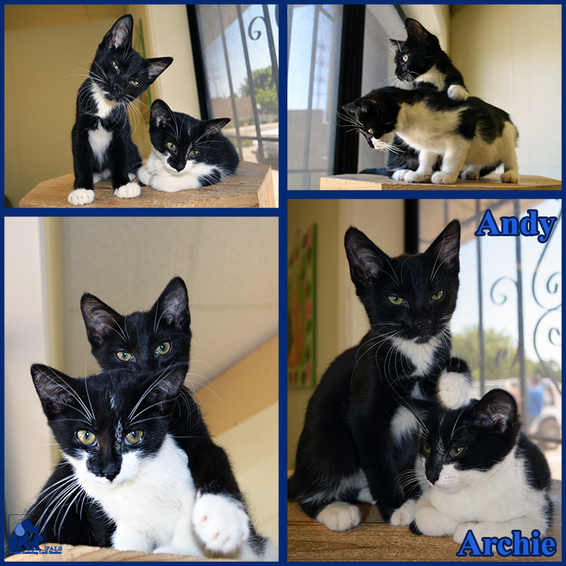PALS Pet of the Week - Archie & Andy 1.5