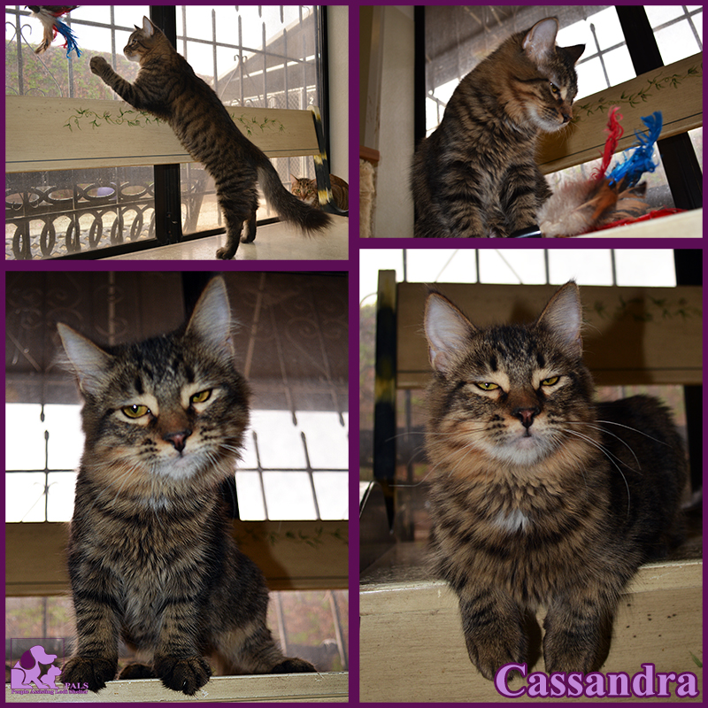 PALS Pet of the Week - Cassandra 1.5