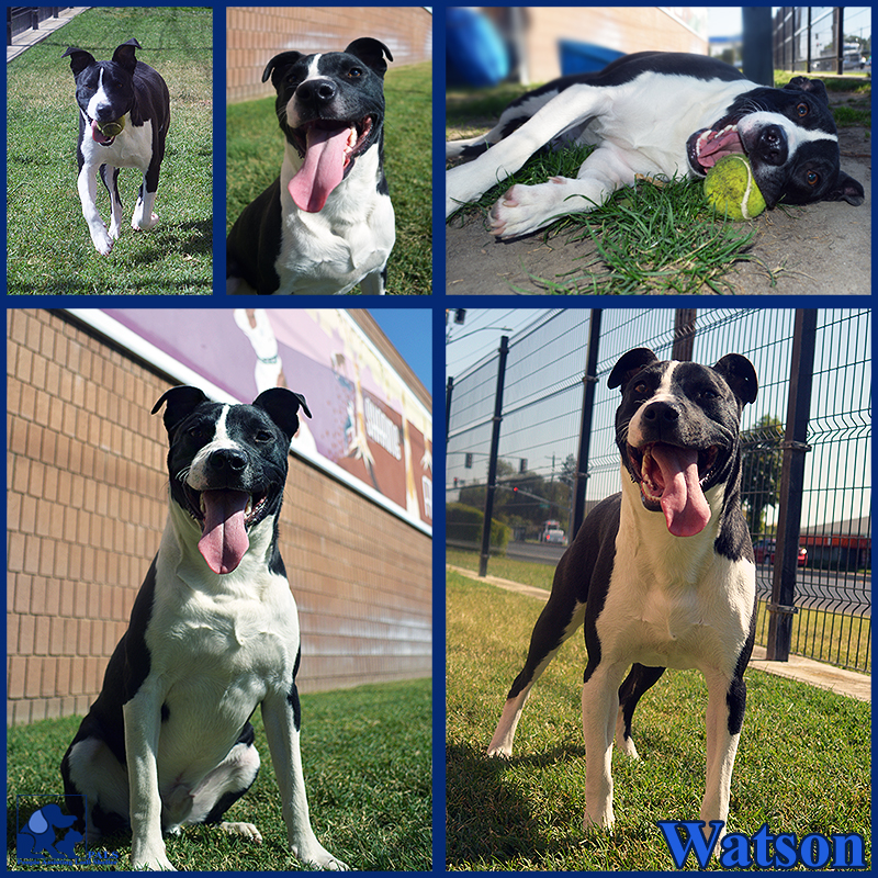 PALS Pet of the Week - Watson 1.5