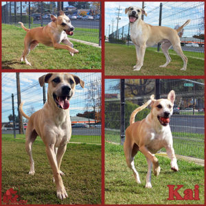 PALS Pet of the Week - Kai 1.5