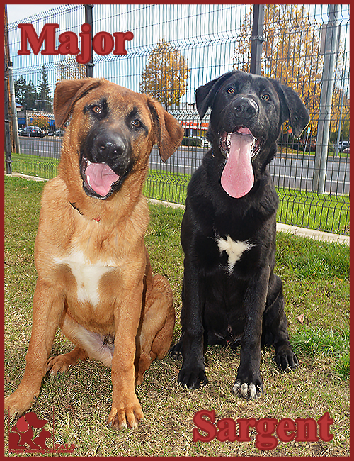PALS Pets of the Week - Sargent & Major .5