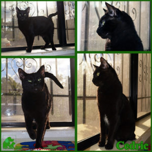 PALS Pet of the Week - Cedric 1.5