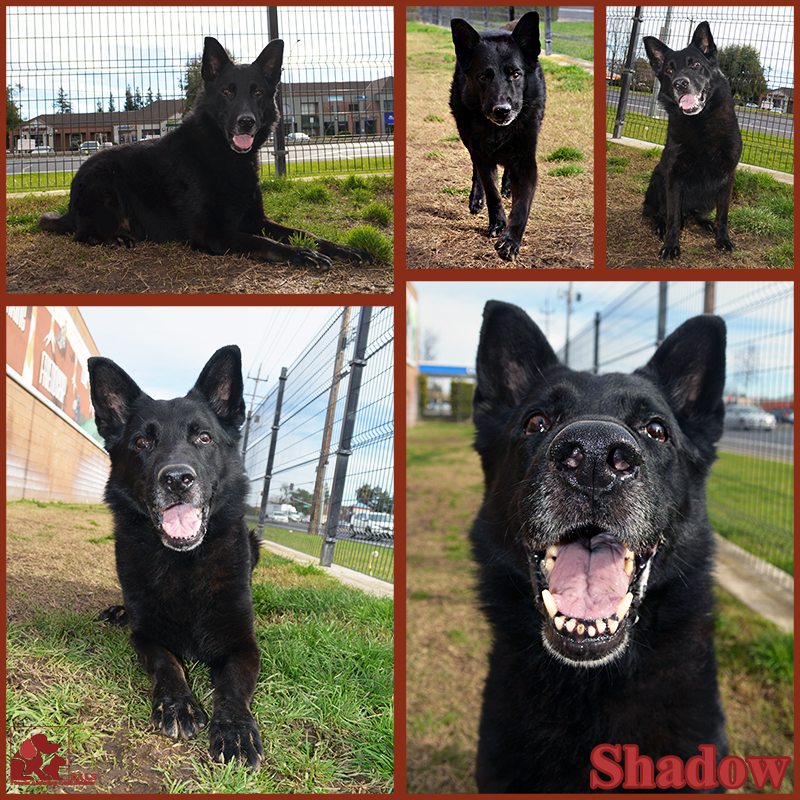 PALS Pet of the Week - Shadow 1.5