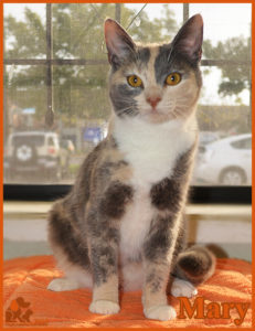 PALS Pet of the Week - Mary .5